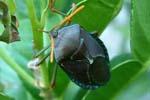 Bugs & Fertilising